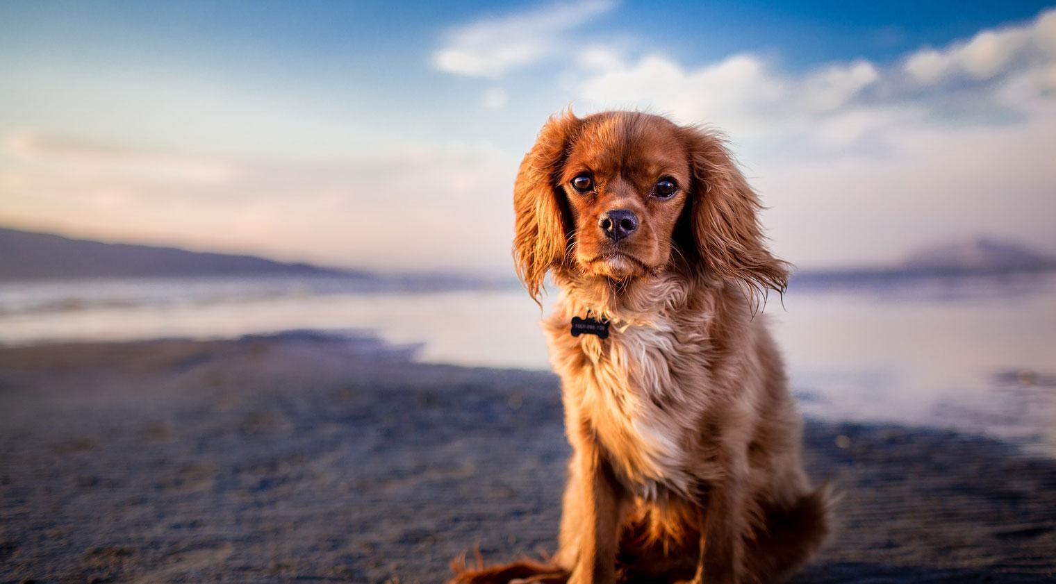 Adopt Pet Now